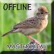 Suara Burung Branjangan Gacor by Smanxar Studio