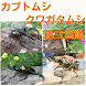 カブトムシ・クワガタムシ 最強昆虫図鑑 世界最大のカブトムシ ヘラクレスも掲載 最強昆虫ムシキング