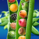 Fruits Vegetables Wallpapers by danilzaharov