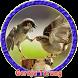 Burung Gereja Gacor Ngerol Panjang