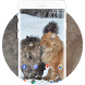 Theme for Motorola Defy XT Cats Wallpaper by Theme Guru