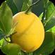 رجيم الليمون by RAHamdy