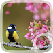 Spring Flowers Wallpaper by UniversalWallpapers