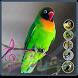 Terapi Kicau Burung Lovebird by Wulantini_Studio