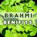Brahmi Benefits by Health Info