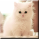 Cute Kittens Live Wallpaper by Jay´s Appsolution