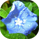 Flowers in dew live wallpaper by Neygavets