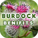 Burdock Benefits by Health Info