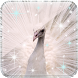 Peacock Live Wallpaper by Desai Global