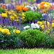 Ухаживать за цветами by KomfortStudio