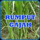 Cara Budidaya Rumput Gajah by Nietzhee