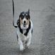 Athens Dog Training LLC App by Healcode LLC