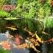 Fish Tele Chat by Iwan Mulyana