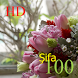 100 Şifa HD by KenMac Holdings Limited
