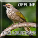 Suara Burung Cucak Rowo Gacor by Smanxar Studio
