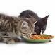 Cat Food Live Wallpaper by Secondka