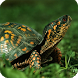 Turtle Live Wallpaper by WallpapersLove