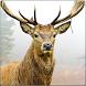 Deer Hunting 3D Sniper Shooter by MegaByte Studios - 3D Shooting & Simulation Games