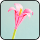 Origami Flowers by Tunny Apps