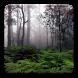 Serene Rainfall Live Wallpaper by Digital Elixir