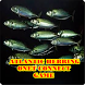 Atlantic Herring Onet Connect Matching Game