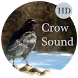 Crow Sounds by Miniclues Entertainment