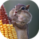 Funny rodents live wallpaper by Neygavets