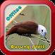 Master Kicau Burung Pipit by Iklil Studio