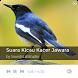 Suara Kicau Kacer Jawara by SoundsLabStudio