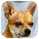 Dog Barking Sounds by American Dream 16