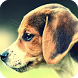 Beagle Dog Pack 2 Wallpaper by LwpMaster