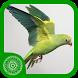 Burung Parkit by DURIEMAS.COM