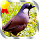 Suara Burung Poksay Mandarin by Jayakerta Bizz