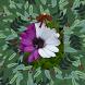 Удивительные цветы мира