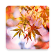 Beautiful Autumn Live Wallpaper by Amax LWPS