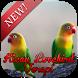 Kicau Lovebird Terapi by slinkythedev