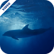 Dolphins Underwater Video Live Wallpaper by HD Video Themes