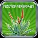 Plantas Medicinales by Juan Alcides