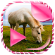 Wild Horses Live Wallpaper by Top Friendly Apps and Games
