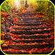 Autumn Forest Video Wallpaper by Lewiski