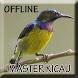 Suara Burung Sogok Ontong Gacor by Smanxar Studio