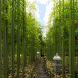 Bamboo Forest Lane by DMF, Inc.