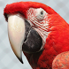 Parrot HD Wallpaper by fringstore.com
