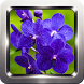 Orchid Flower Wallpapers by Omah Pandega