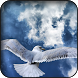 Seagull Wallpapers by HAnna