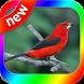 Canto Tiesangue by canto de app