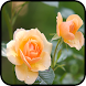 HD Fresh Flowers by Tunny Apps