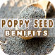 Poppy Seed Benefits by Health Info