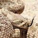 rattlesnakes wallpaper by Dark cool wallpaper llc