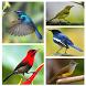 Kumpulan Suara Burung Offline by Smanxar Studio